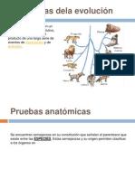 Evidencias de la Evolucion.pptx