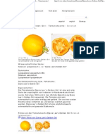 Djena Lee's Golden Girl - Solanum Lycopersicum L