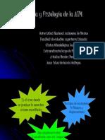 Histología y Fisiología de la ATM