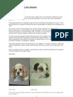 Animal Artistry Information