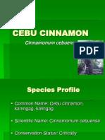 Cebu Cinnamon Tree
