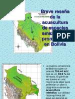 Breve reseña del estado actual de la acuacultura amazónica en Bolivia