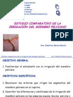 Irrigacion Del Mienbro Pelviano-Comparada