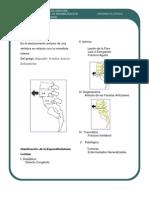 Espond Ilo List Es is PDF