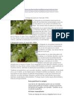 Plantas Medcinales PDF