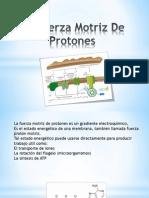 La Fuerza Motriz De Protones.ppsx