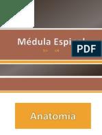 Medula Espinal Integrador