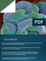 mecanismos inmunologicos