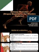 muscularicaciondelmiembrosuperior-130627033103-phpapp01