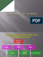 Brain Organization