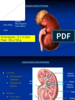 Fisiologia Renal Tegnoluap
