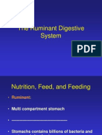 Feed and Feeding I Note