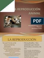 la-reproduccin-animal-1217457932777105-9