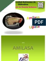 AMILASA & lipasa