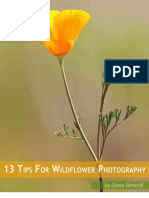 photonaturalist-13tips-wildflowers