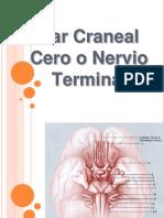 Par Craneal 0
