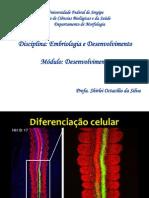 EmbDes5_Diferenciação_celular