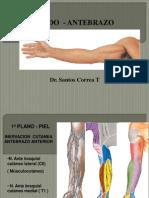 PDF Opia de Codo-Antebrazo- Correa