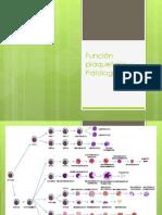 Función plaquetaria y Patologia