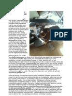 Tierhalter-Haftpflicht schützt Hundebesitzer