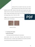 halaman 30 revisi