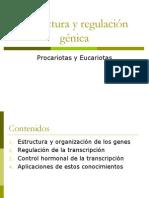 estructurayregulacingnica-1