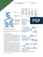 DNA Replication Concept