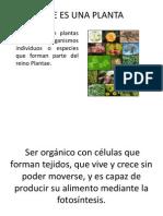 2. Las Plantas