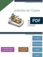 Enfermedades en Cuyes