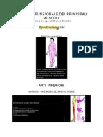 [eBook - Med] Ortopedia - Anatomia Funzionale Dei Principali Muscoli