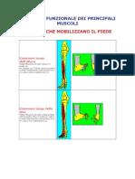[E-Book - ITA] Allenamento - Anatomia Funzionale Dei Principali Muscoli