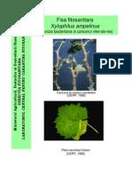 xylophilus