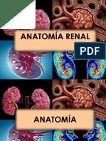 Anatomia Renal