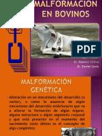 Malformación en bovinos