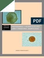MGII Practica 1 Protozoarios-Y-helmintos