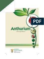 Anthuriumflower