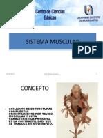 Brg.I.05.S.muscular