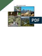 Flora y Fauna de La Sierra