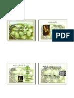 Azeite - Processamento.pdf
