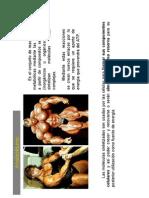 Metabolismo ANABOLISMO