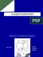 Gametogenesis Repaso
