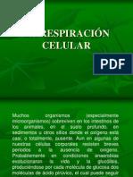 respiracionyfermentacion-1230531886857134-1