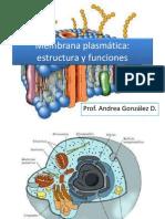 Membrana plasmática Y transporte de membrana