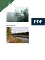 Tipos de Bosques Nublado
