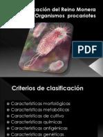 Clasificacion procariotas