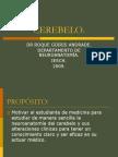 neuroanatomia CEREBELO