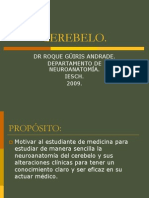 neuroanatomia CEREBELO
