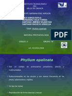 Phyllum opalinata