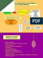 Información-Receptores sensoriales