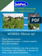 Exposicion Morera y Sericultura